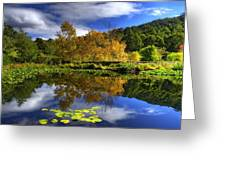 Reflections Greeting Card by Damian Morphou
