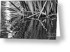 Reflections In Black And White Greeting Card