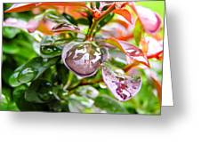 Reflections In Raindrops Greeting Card