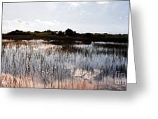 Reflections In The Everglades  Greeting Card