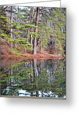 Reflections In The Pines Greeting Card
