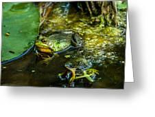 Reflections Of A Bullfrog Greeting Card