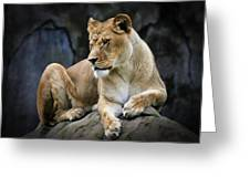 Reflections Of A Lioness Greeting Card