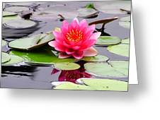 Reflections Of A Pink Waterlily  Greeting Card