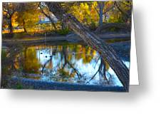 Reflections Of A Pond 2 Greeting Card