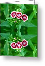 Reflections Of A Summer Bouquet Greeting Card