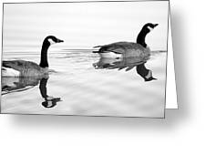 Reflections Of Geese Greeting Card