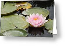 Reflections Of Lily Greeting Card