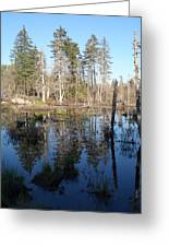 Reflections Of Maine Greeting Card
