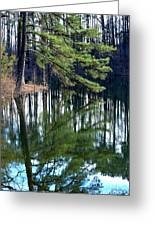 Reflections Of The Pine Greeting Card