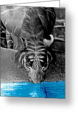 Reflections Of The Wild Negative Greeting Card