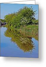 Reflections Of Trees Greeting Card