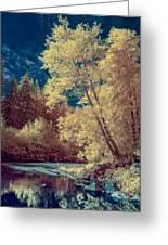 Reflections On Bull Creek Greeting Card