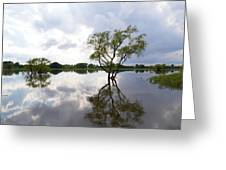 Reflective Flood Waters Greeting Card