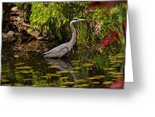 Reflective Great Blue Heron Greeting Card