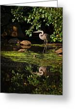 Reflective Heron Greeting Card by Sylvia J Zarco