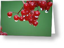 Reflective Red Berries  Greeting Card