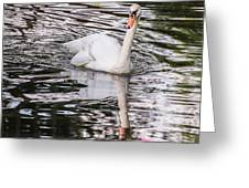 Reflective Swan Greeting Card