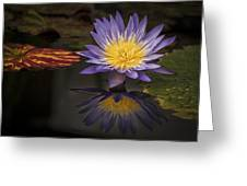 Reflective Water Lily Still Life Greeting Card