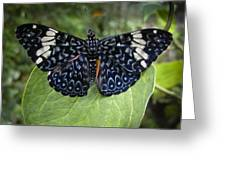 Regal Blue Butterfly Greeting Card