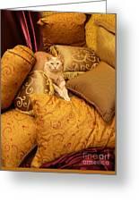 Regal Feline Greeting Card