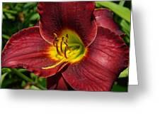 Regal Rouge Greeting Card
