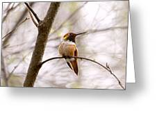 Regal Rufous Hummingbird Sitting Greeting Card