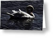 Regal Swan Greeting Card