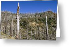 Regrowth Since Eruption Mt Saint Helens Greeting Card