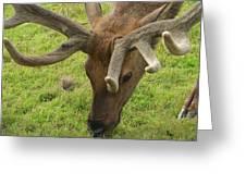 Reindeer Head Greeting Card