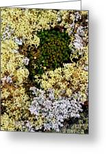 Reindeer Moss And Lichens Greeting Card