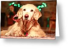 Reindog Greeting Card by Brenda Schwartz