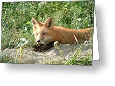 Relaxed Fox Greeting Card