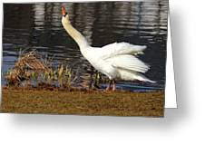Relaxed Swan Greeting Card