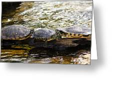 Relaxin' Turtles Greeting Card