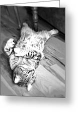 Relaxing Cat Greeting Card