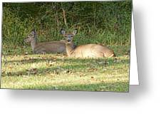 Relaxing In The Sun And Shade Greeting Card