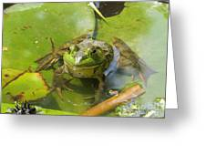 Relaxing On A Lily Pad  Greeting Card