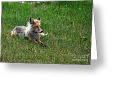 Relaxing Red Fox Greeting Card