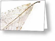 Remnant Leaf Greeting Card