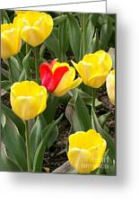 Renegade Tulip Greeting Card