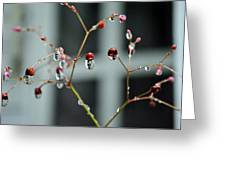 Repeated Reflections Greeting Card