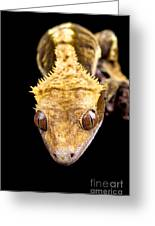Reptile Close Up On Black Greeting Card
