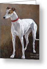 Rescued Racer Greeting Card by Charlotte Yealey