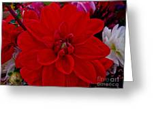 Resoundingly Red Greeting Card
