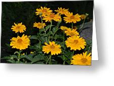 Resplendent Yellows Greeting Card