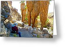 Rest Stop In Andreas Canyon Trail In Indian Canyons-ca Greeting Card
