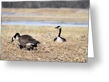 Restful Migration Greeting Card