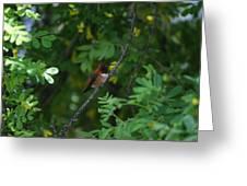 Restful Perch Greeting Card