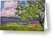 Resting Among The Bluebonnets Greeting Card